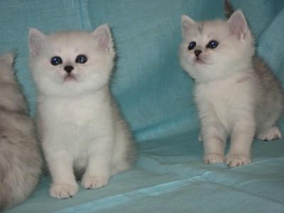 Плюшевые Кошки Фото: http://tominecraft.ru/plyushevye-koshki-foto.html